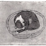 Etching of an old tuxedo cat sleeping in a basket, she's curled in a fetal position, covering her face with one of her paws, by Maurilio Milone